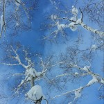 snow crusted trees in rusutsu