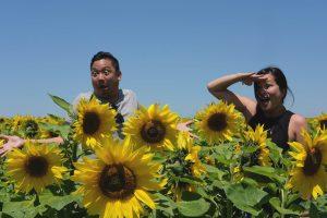 cy_nads_sunflower1