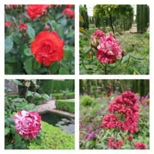 PicsArt_06-08-11.38.55