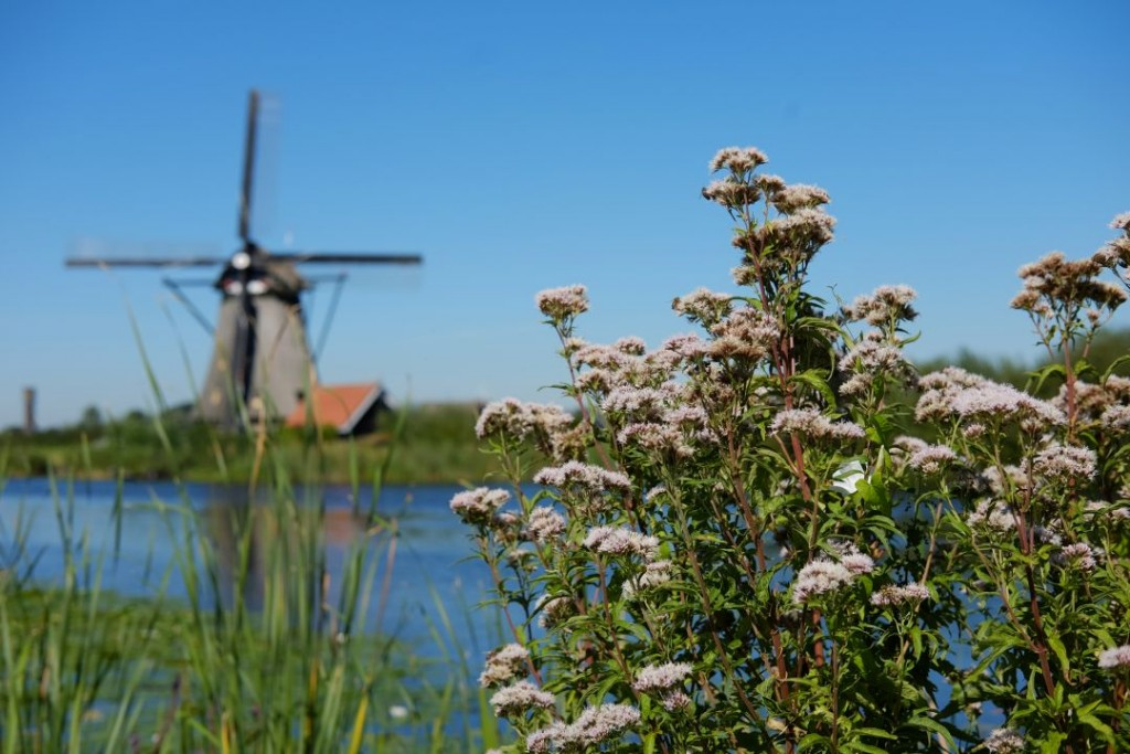 biking_in_kinderdijk_windmills012